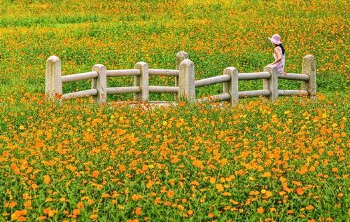 Đưa em vào hạ - ca khúc nhạc tiền chiến nổi tiếng qua tiếng hát Duy Khánh, Chế Linh, Bảo Yến